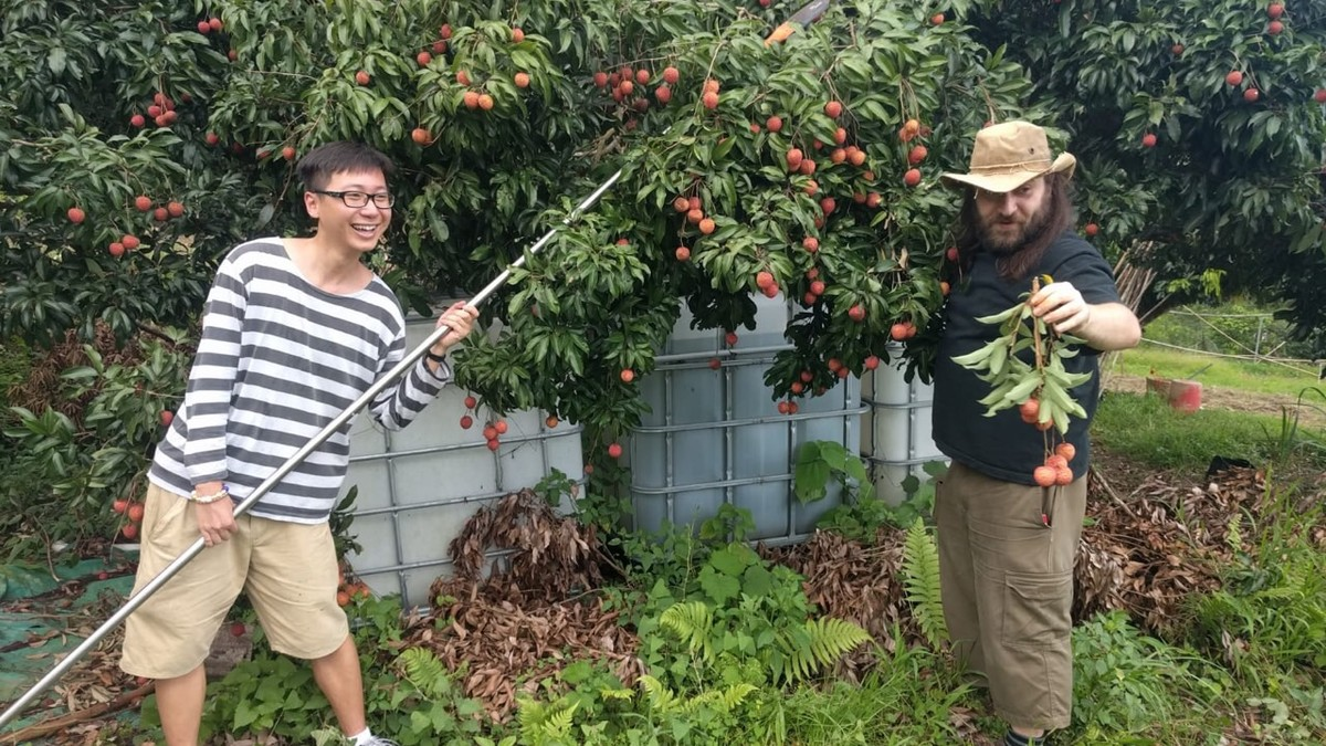 Reconstruction of planet Mül : Lychee picking with Farmer in Chief