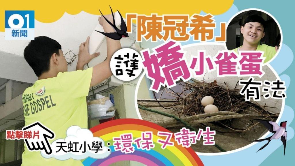 自來斑鳩天虹小學孵蛋(HK01)