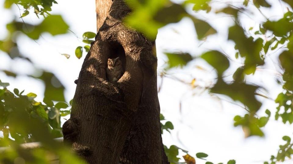 李城璧動物園-貓頭鷹