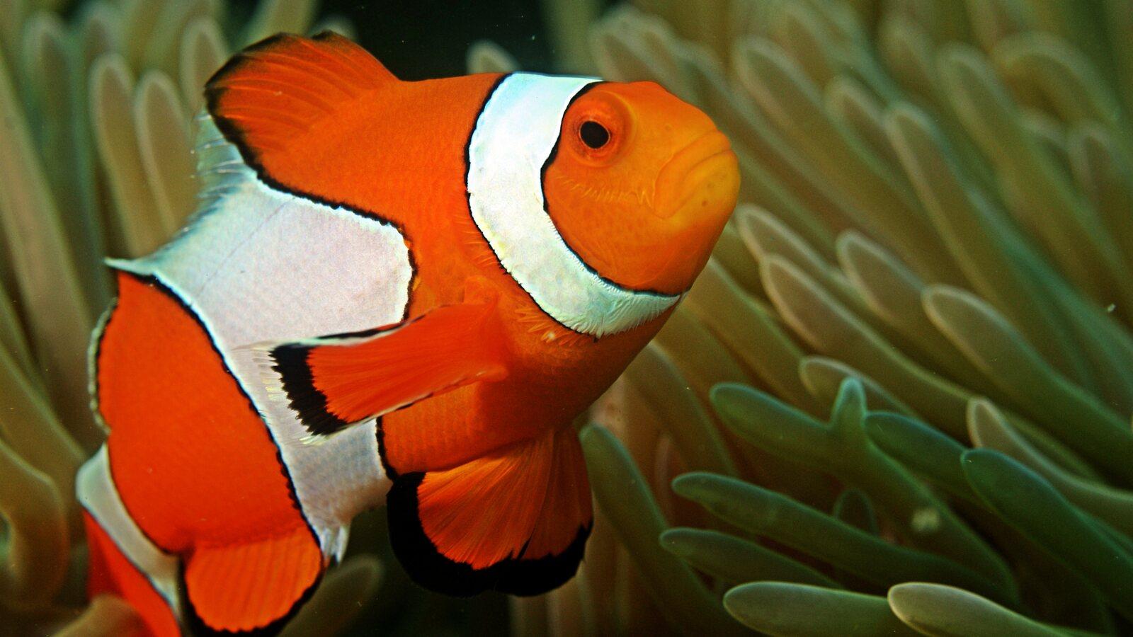 Grade 4-6 School Aquarium