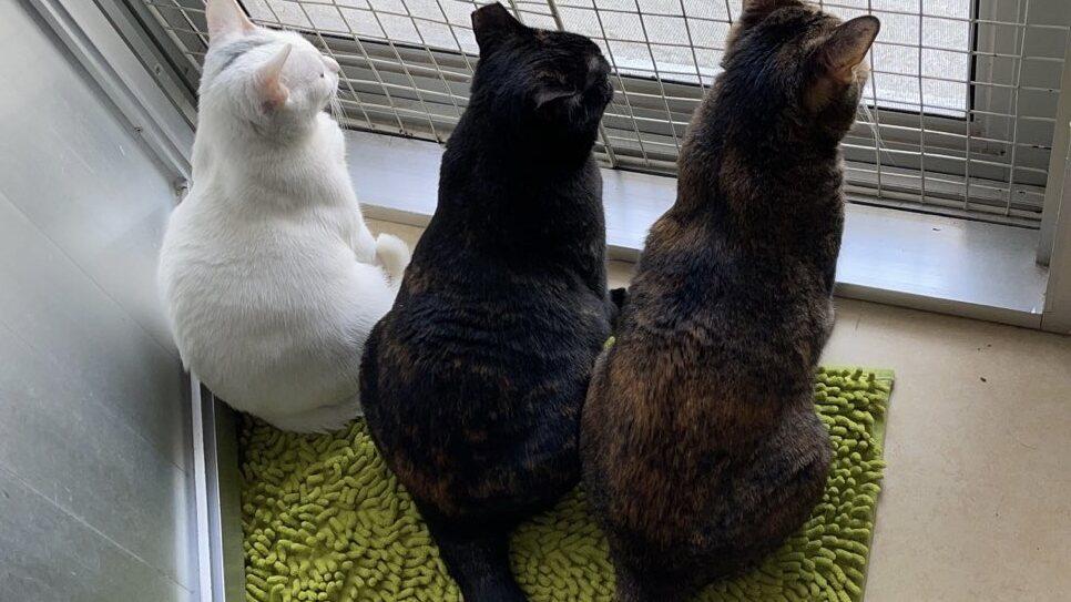 流浪貓貓拯救隊