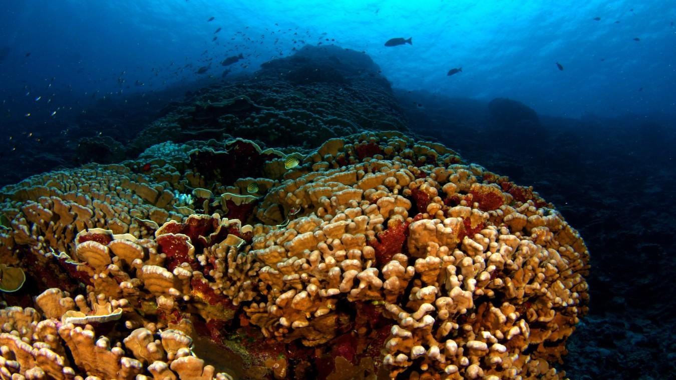 Coral Reef Investigation