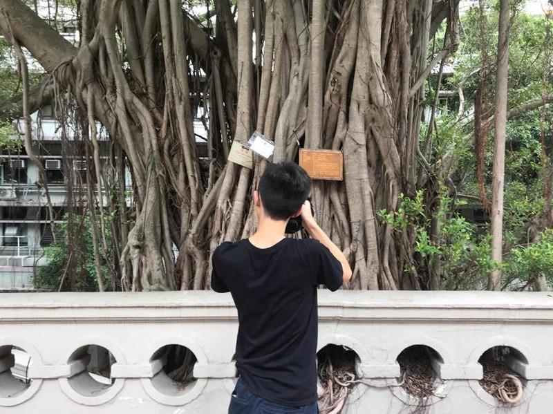 Timber 香港古樹皮圖鑑