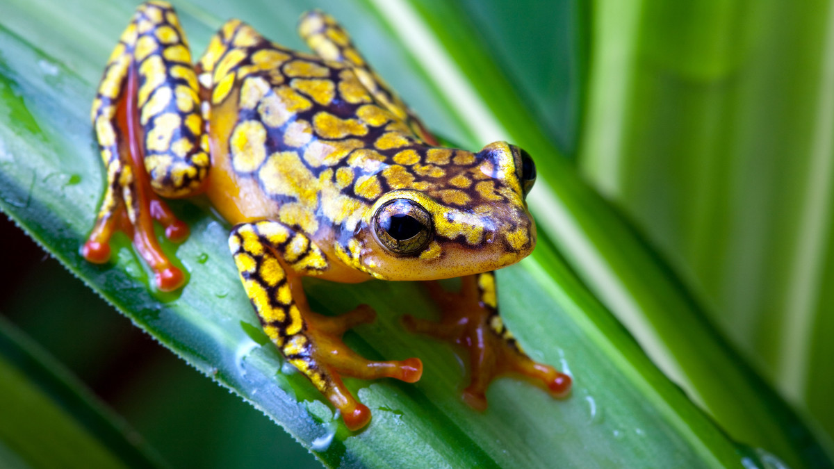 EcoImaging 物種辨認應用程式